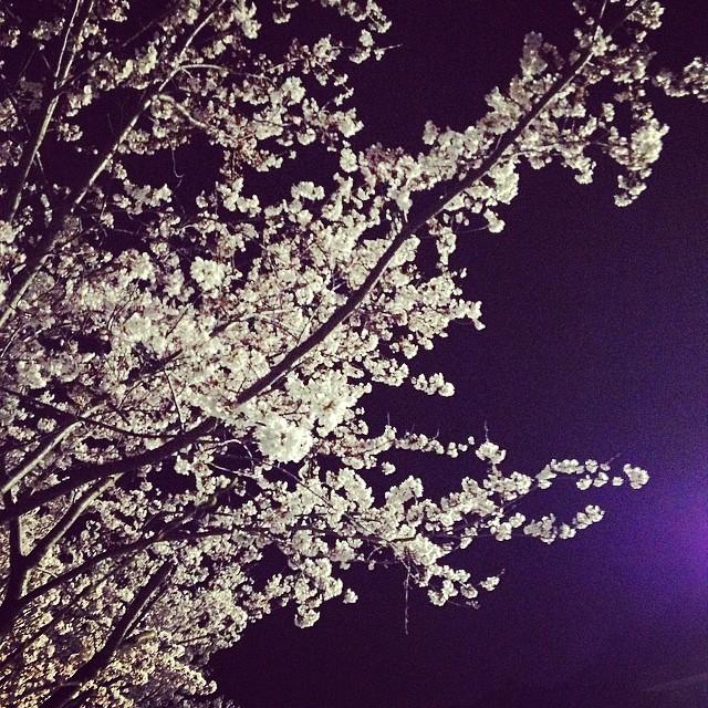 綺麗 #夜桜 #like