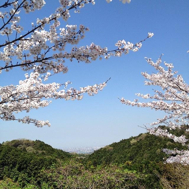 また来年かな #桜 #イマソラ #空 #like
